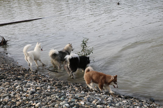 All of our girls getting their feet wet