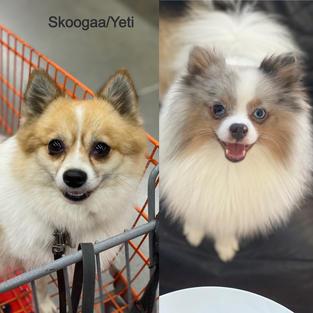 PARENTS: Skoogaa/Yeti
