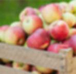 verenigingflevofood_appels.jpg