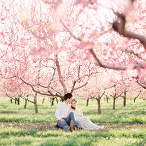 Spring blossom engagement in niagara on the lake