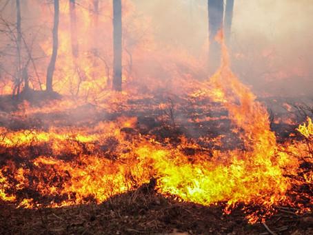 Wildfire Mitigation Tax Deductions in Colorado