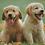 Thumbnail: Dog Training eBook