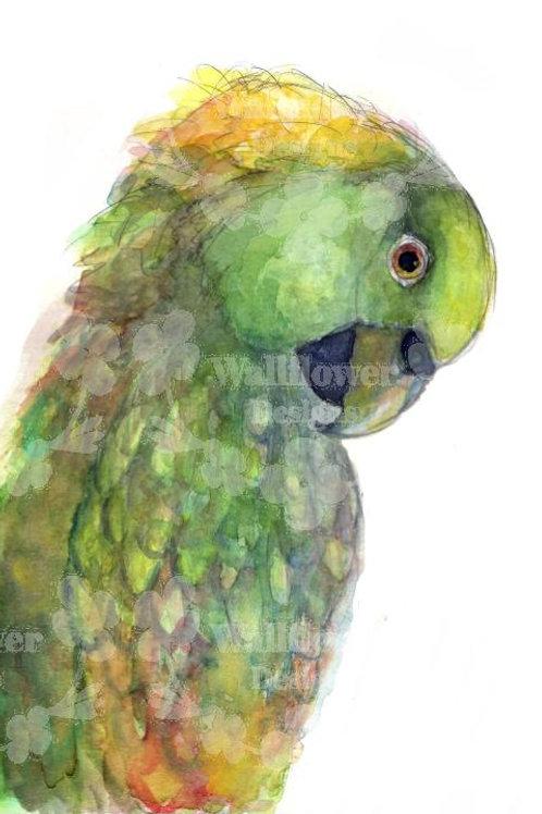 Parrots - V