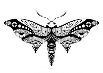 illustration-papillon-nuit_7586-2860.jpg