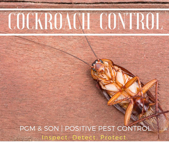 cockroach control extermination removal