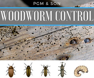 Woodworm treatment hereford removal exte