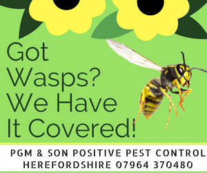 Got Wasps? We Have It Covered! We are your local pest control company covering Herefordshire.