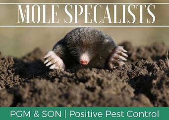 Mole Specialist Herefordshire. Mole Remo