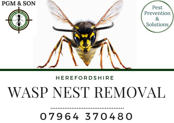 Call us on 01981 241334 or call our wasp pest technician Phil on directly 07964 370480. Or, you can email us at contact@pgmpestcontrol.co.uk or you can use the contact us page on our website.