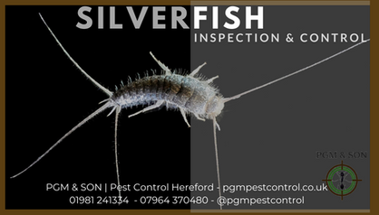 Silverfish Inspection Extermination Remo