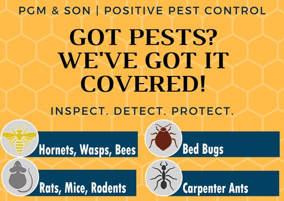 Our team is trained and certified to protect your home or business from any pest!  Wasps | Rat infestations | Mice | Moles | Carpet moth | Carpet Beetle | Cockroaches  Birds | Ants | Fleas | Hornets | Bedbugs and more!
