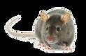 RAT PNG.png