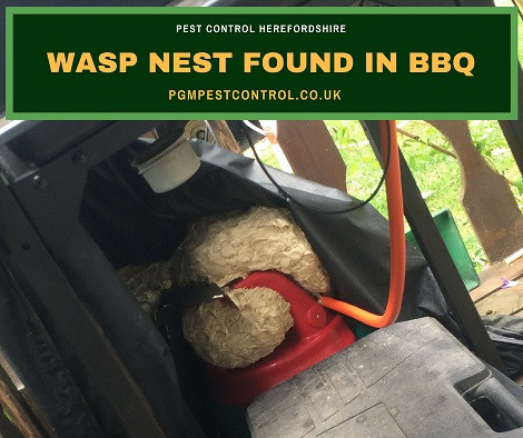 Got Wasps? Don't panic! – call PGM & Son Pest Control Herefordshire today  on 07964 370480.