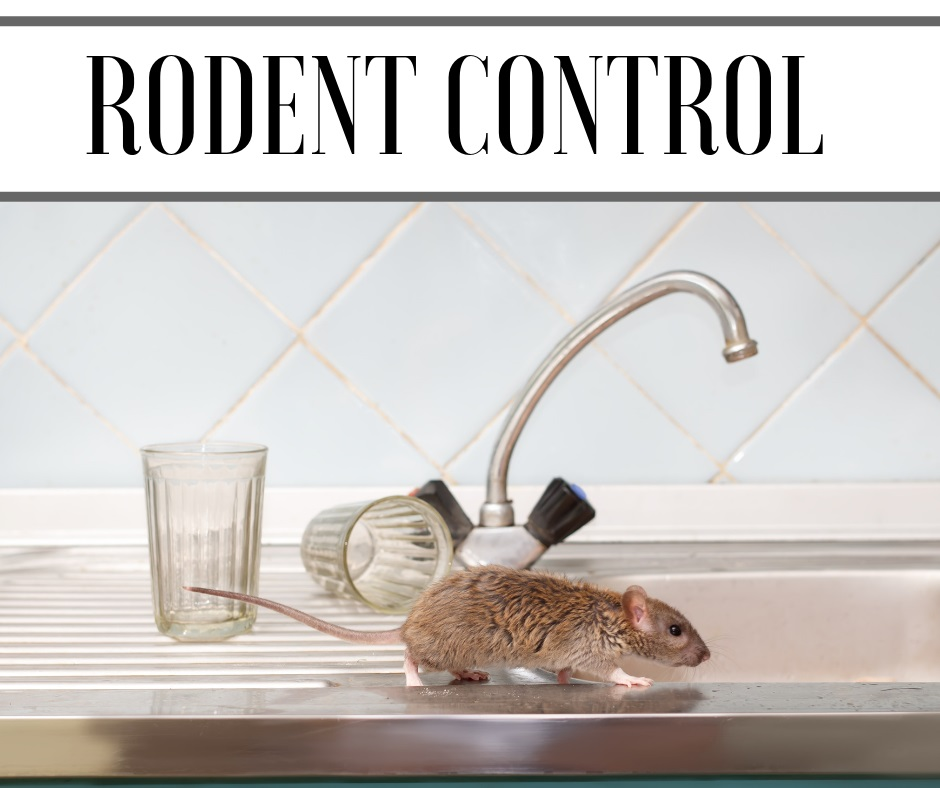 rat rodent control Herefordshire 2019