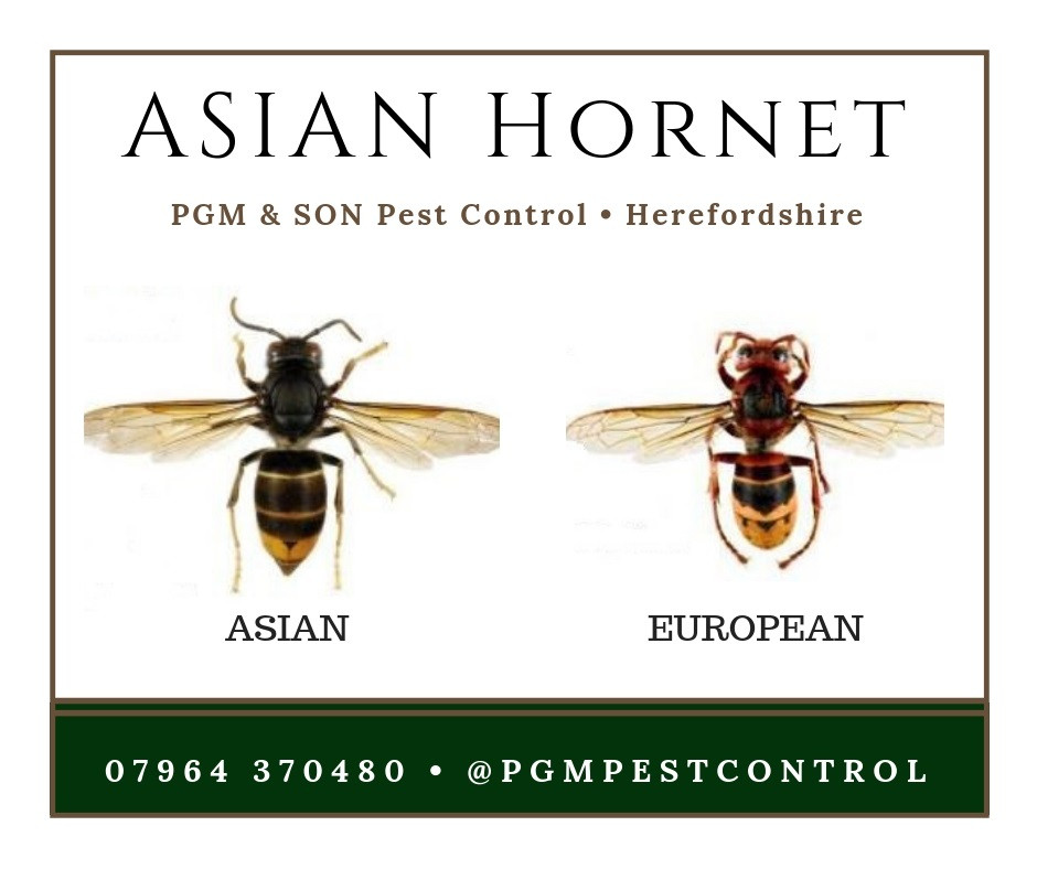 PGM & SON is an established Pest Control Company serving Herefordshire and all local villages. Our Upper Tier Carrier Dealer registration permits us to carry, handle and dispose of customers controlled waste. Controlled wastes include commercial, industrial, household and hazardous waste.  ABOUT US PGM & Son provide pest control solutions to residential and commercial businesses across Herefordshire.  Our company is a well respected and experienced pest control service. Any of your bug and pest problems will be quickly eliminated with quality & guaranteed work by our professionally trained technicians who can control pests safely, legally and effectively.