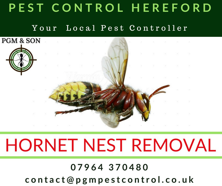 PGM & Son provide pest control solutions to individuals and businesses across Herefordshire. We also offer a variety of techniques, including pesticide free and organic solutions, preventative and proofing works and more traditional methods.