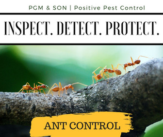 Ant Control removal hereford herefordshi
