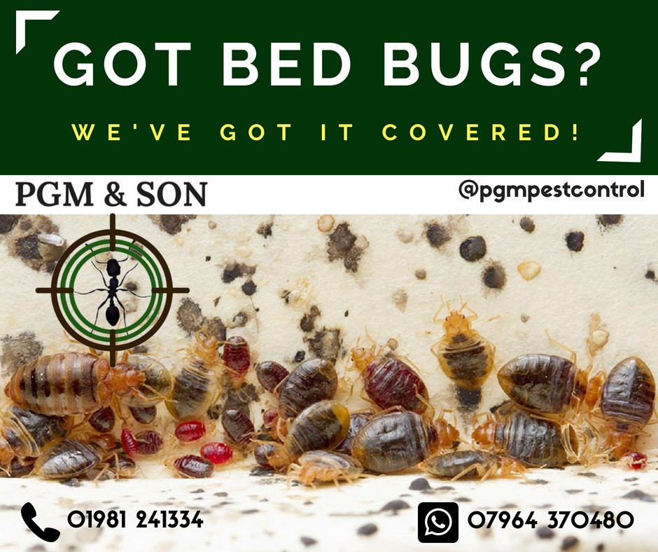 We manage bed bug control for many leading hotel chains as well as individual premises. Our qualified team of professionals bring their experience and know-how with them on every job. But what really sets our services apart from the rest of the industry is our attention to detail and receptiveness to the unique needs of each client.