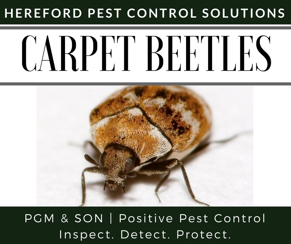 PGM was founded by Phil Martin who has extensive experience in his field, having trained under James Ostler former Vice President of the British Pest Control Association (BPCA) and owner of Positive Environmental Hereford, Herefordshire.
