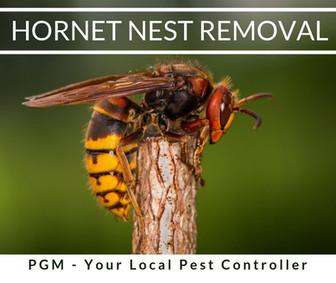 Asian Hornet Nest Removal Hereford _ Pes