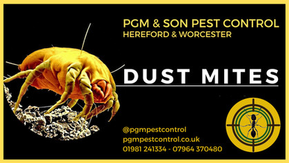 Dust Mites - your local pest controller