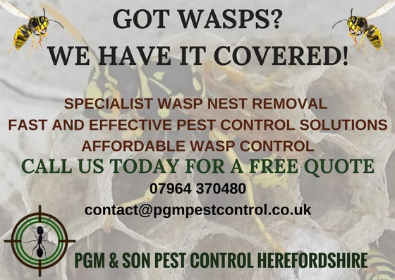 Professional Wasp Nest Removal and Control In Herefordshire
