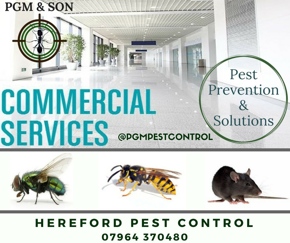 PGM & Son offers commercial businesses, offices, warehouses, restaurants, hotels, clubs, pubs, schools and hospitals a full range of pest management options tailored to suit the needs of any business. Our aim is to resolve your pest control problem as quickly as possible whilst minimising disruption to your business operations.    Our integrated commercial pest treatment solution will help you remove rats, termites, cockroaches and other pests from your commercial space. Our mission is to protect your business from any unwanted pests.