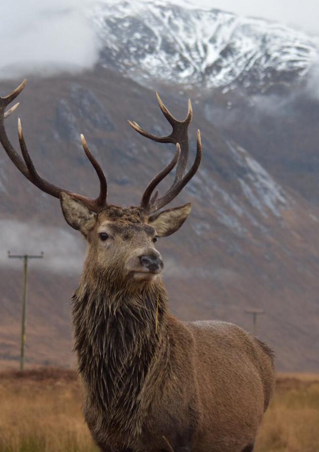 Scottish Wildlife   Glencoe, Scotland - DEC 2019