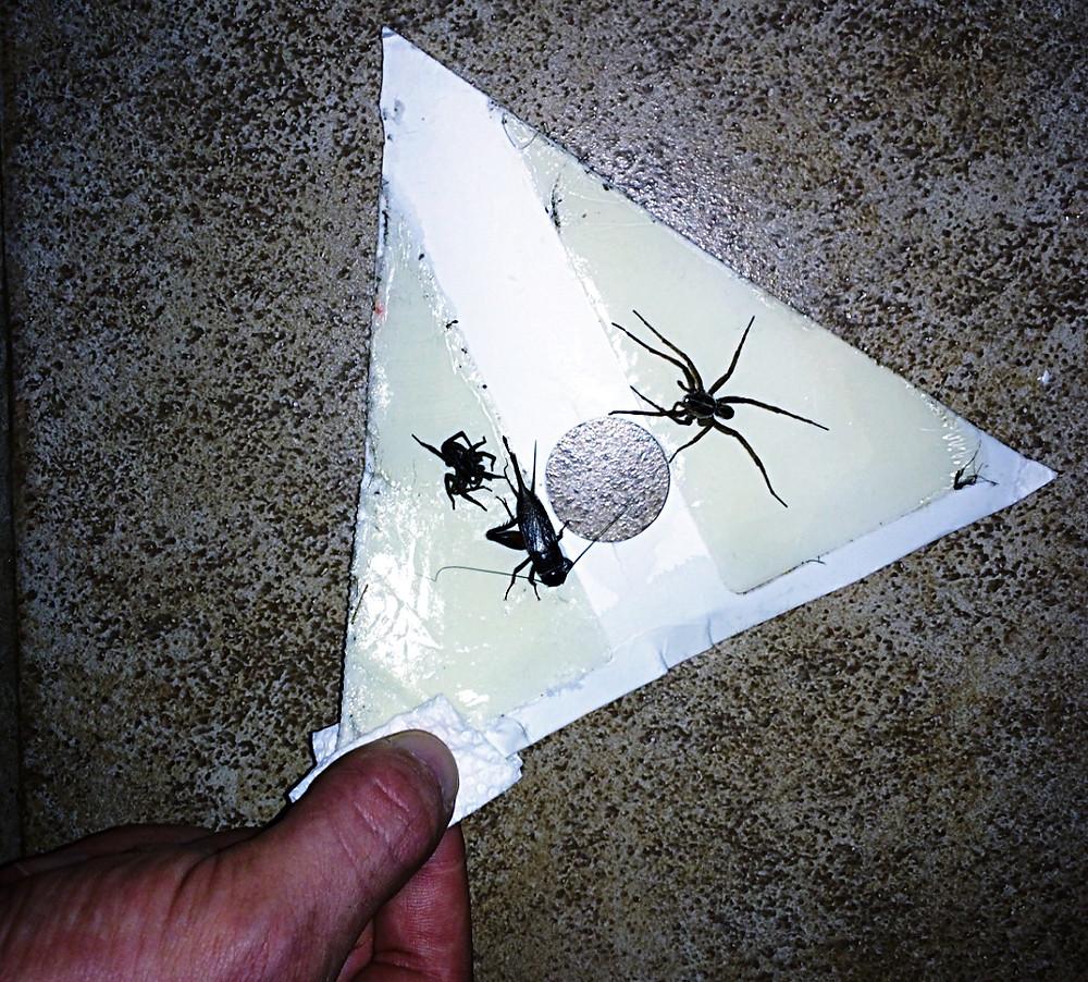 sticky spider trap; sticky roach trap; glue trap for mice; Happy Cornerz Trap; pest control DIY solution