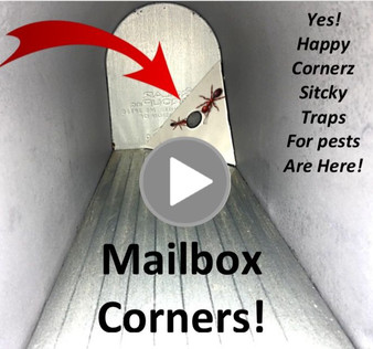 sticky glue traps for ants in mailbox pest control sticky traps happy cornerz, mice, siders and other pests