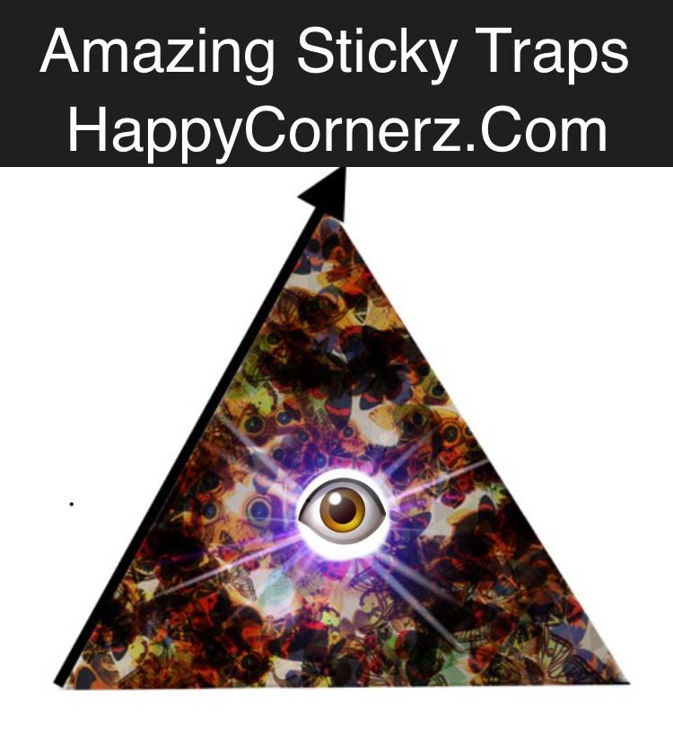 sticky traps; glue traps; spider trap; sticky roach trap; mouse trap; DIY pest control; Happy Cornerz glue traps