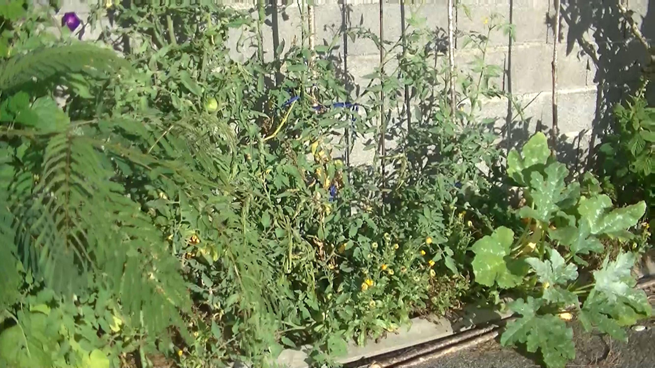 20.-La-récolte-des-graines-commence