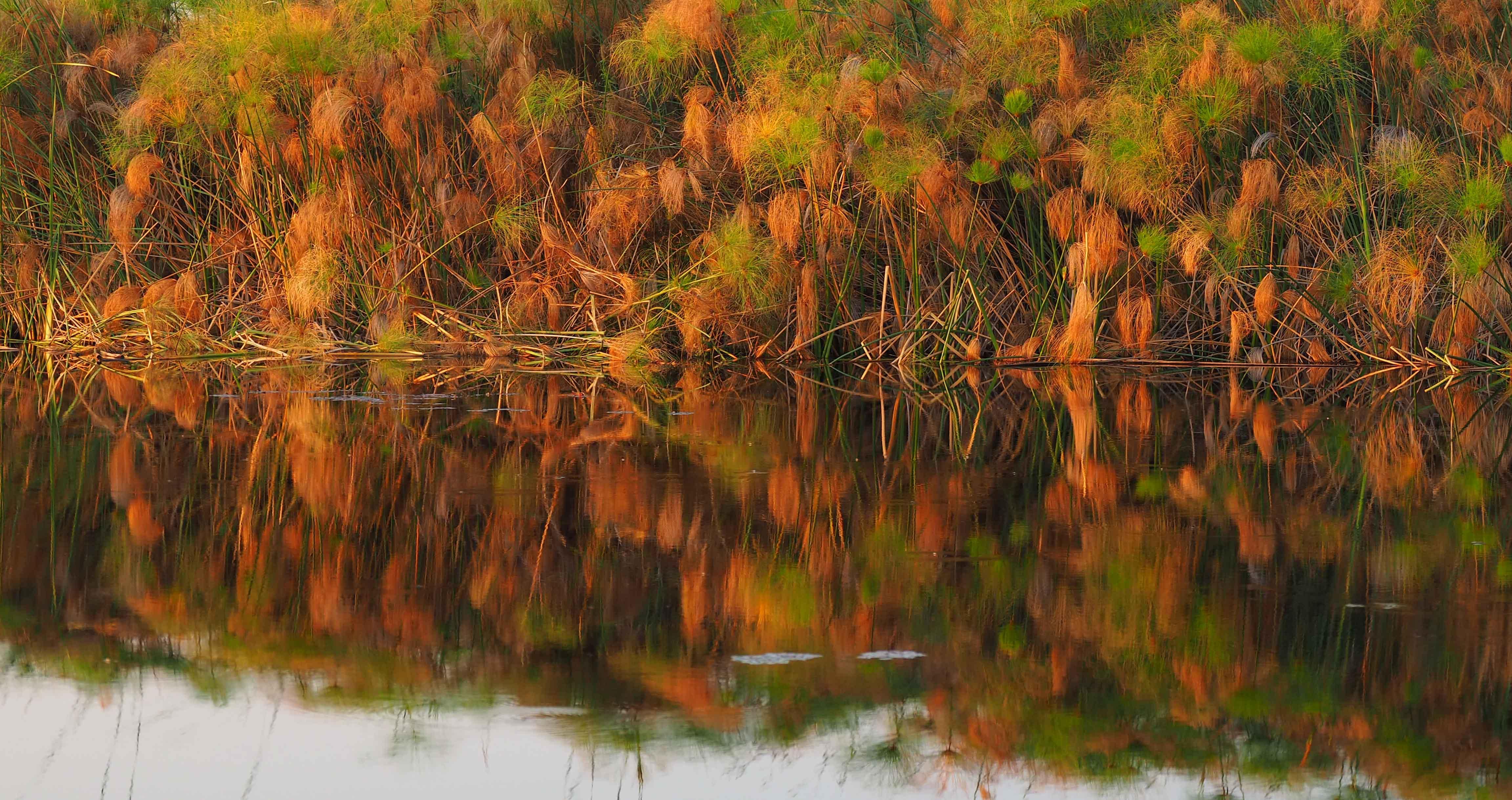 The stillness of the Delta