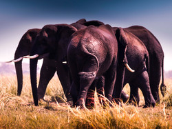 elephant cluster