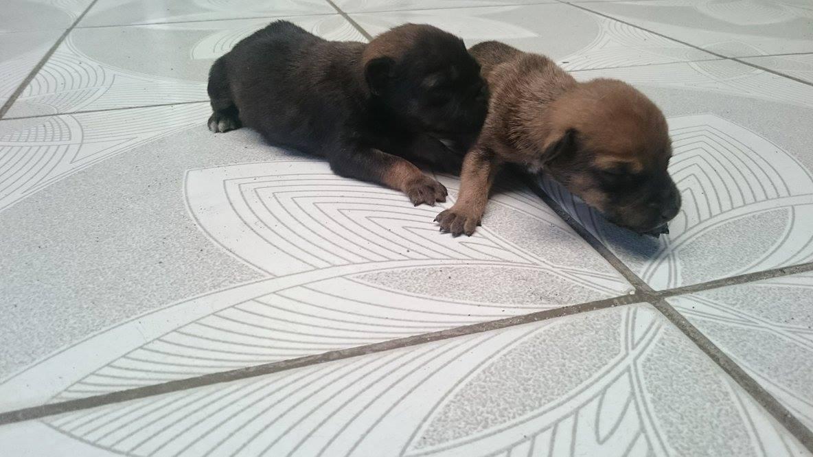Cachorros recien nacidos