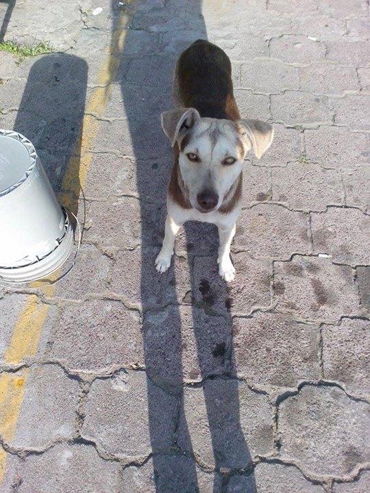Perro en Altamira