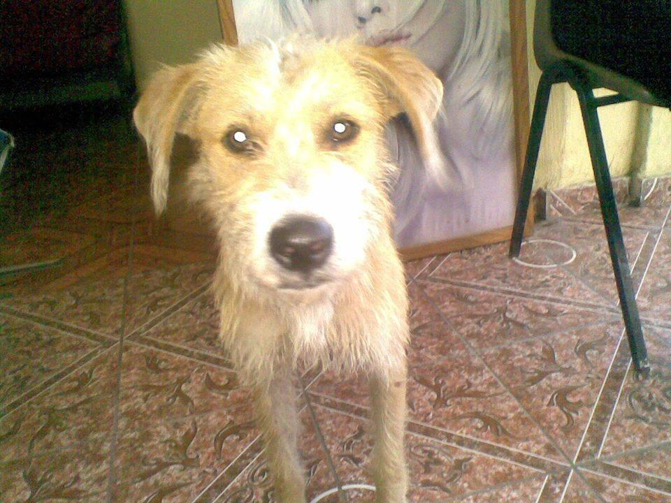 Cachorro en Lourdes.jpg