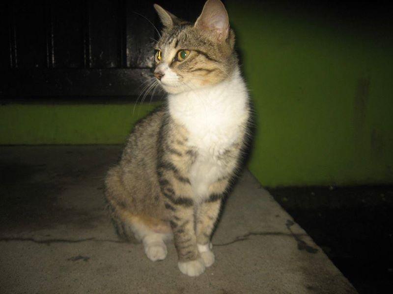 Gatito en Santa Tecla.jpg