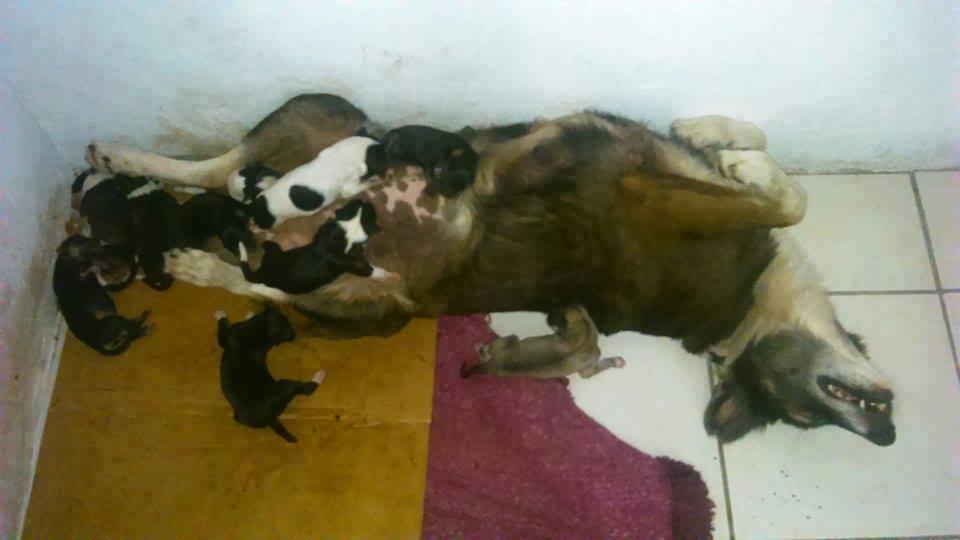 Bellota y sus perritos.jpg