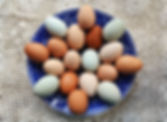 Chick Egg Potpourri WM.jpg