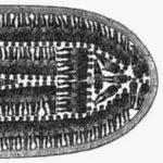 slavenschip-2-150x150.jpg