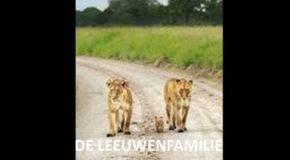 Project 'De Leeuwenfamilie' genomineerd voor Decade Innovation Award (STEM JE ER OP?!!)