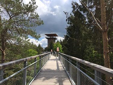 Turm Baumwipfelpfad.JPG