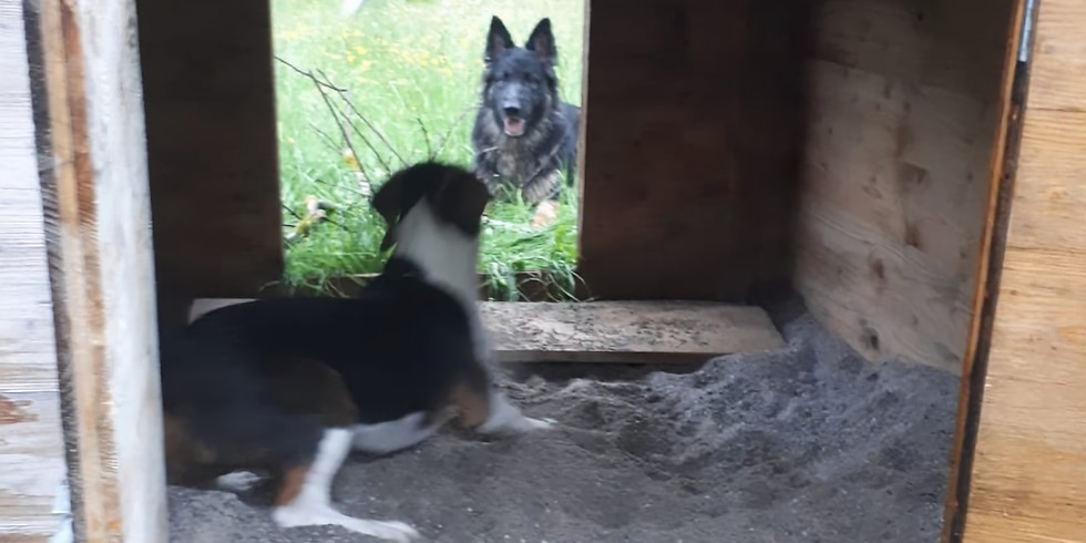 Spieletreff für Große Hunde über 40 cm