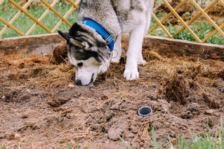 Naturhundegarten-25.jpg