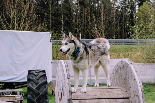 Naturhundegarten-22.jpg