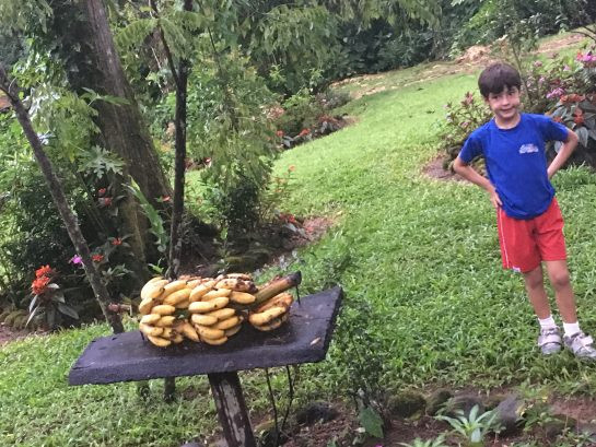That's how you serve bananas. This way the birds, butterflies and humans call enjoy.