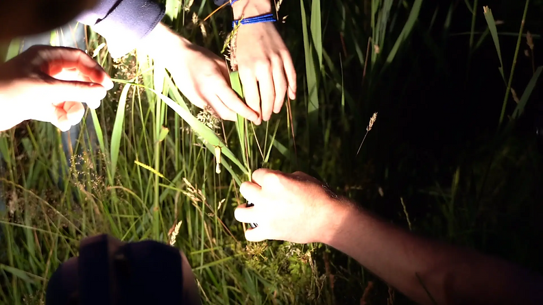 Video still form the moving image work A light sometimes seen hovering over marshy ground, by artist Jo Pester