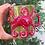 Thumbnail: Octopus Mug -PINES RD