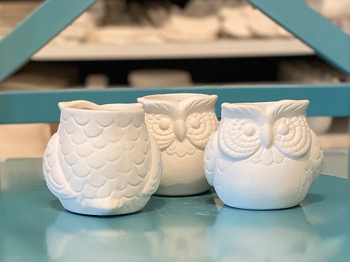 ONE Owl Succulent Container Kit - Kennewick